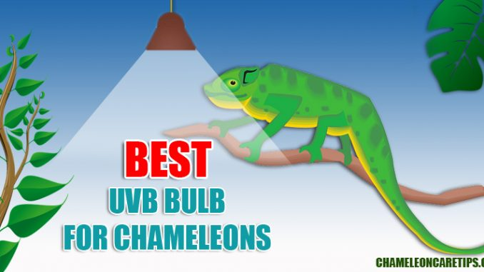 10 Best Uvb Bulb For Chameleons Reviews Amp Guide 2020 Chameleon Care Tips