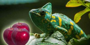 Can Chameleons Eat Apples