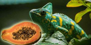 Can Chameleons Eat Papaya