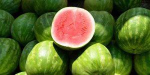Can Chameleons Eat Watermelon